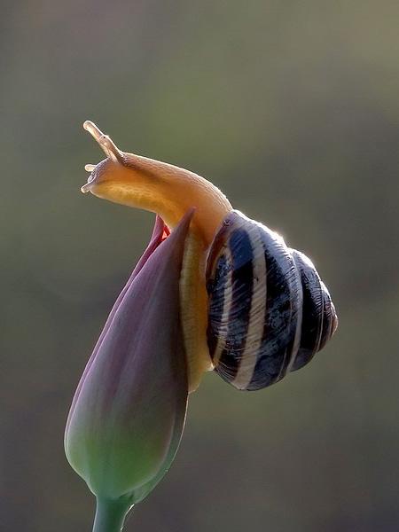 تصاویری از حلزون های زیبا