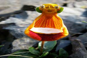 آشنایی با اشکال مختلف گل ارکیده در طبیعت
