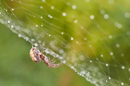دانستنی های در مورد تار عنکبوت