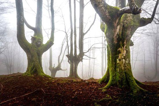 تصاویری از درختان و طبیعت زیبا در پارک ملی اسپانیا
