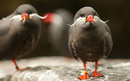 تصاویری از زیباترین و با ارزش ترین پرندگان کمیاب در جهان