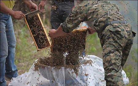 تبلیغ جالب زنبوردار چینی برای فروش عسل