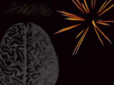 افزایش هوش و بهبود حافظه بلند مدت با برقراری رابطه جنسی