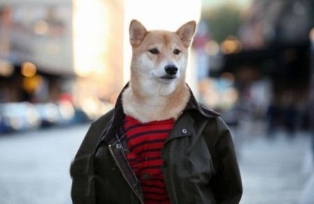 سگ مدلینگ با درآمد ماهیانه 36 میلیون تومان