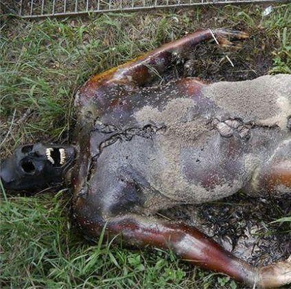 مزرعه اجساد انسان در شهر تگزاس 18+