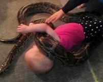 همبازی شدن دختر 3 ساله با مار افعی