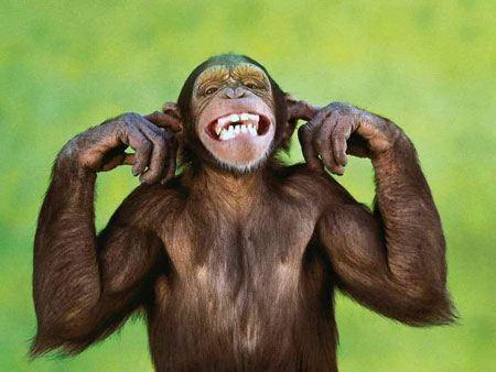 جالب ترین عکس های خنده دار از دنیای حیوانات