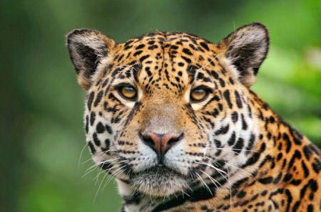 عکس های حیوانات وحشی از نمای نزدیک