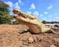 تمساح با کروکدیل چه فرقی دارد؟