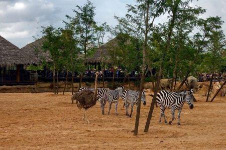باغ وحش مدرن بیو پارک والنسیا در اسپانیا + تصاویر