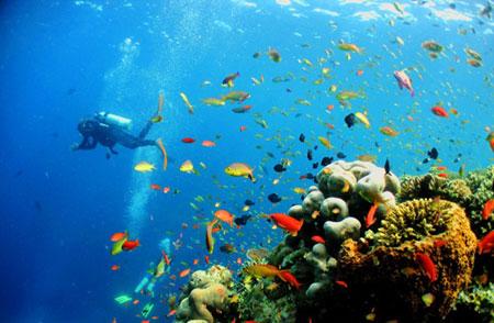 اقیانوس های مناسب برای غواصی در جهان + تصاویر