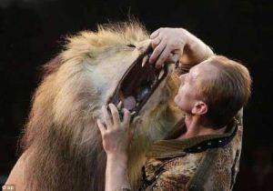 مربی سیرک در مشهد خوراک شیر خشمگین شد + عکس