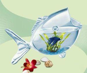 مدل های جدید و متنوع تنگ ماهی