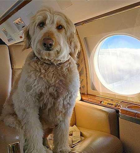 تصاویری از پولدارترین سگ های تیلیاردر در جهان