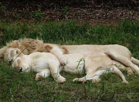 عکس لب گرفتن و بغل کردن عاشقانه حیوانات