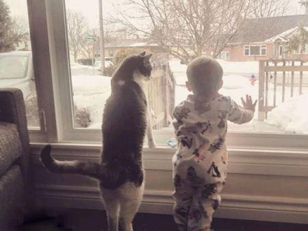 عکس های کودکان ناز در آغوش گربه های خانگی