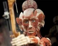 موزه اجساد پوست کنده شده در آلمان + عکس