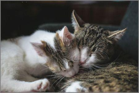 عکس های حال و هول و عشق بازی گربه نر و ماده
