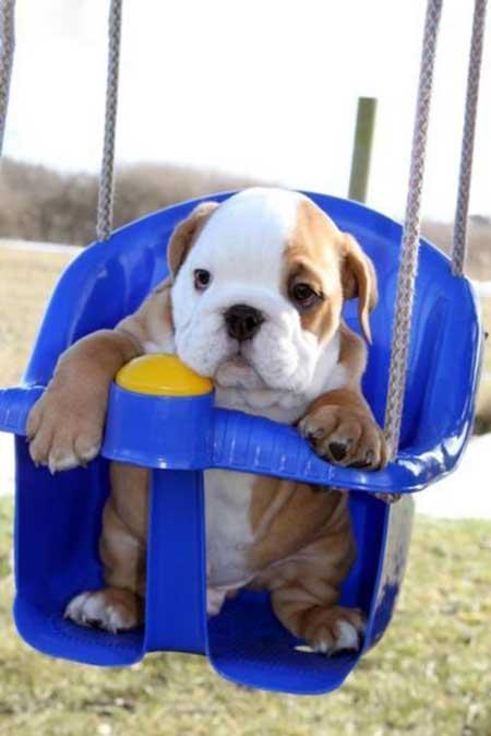 عکس توله سگ های زیبا و دوست داشتنی