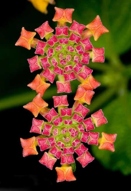 عکس اشکال هندسی جذاب و جالب در طبیعت