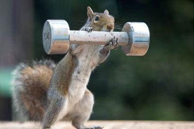 عکس خنده دار از بدنسازی سنجاب