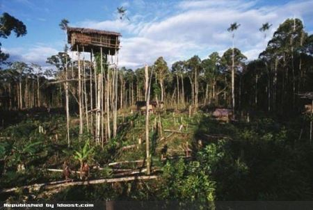 سبک زندگی قبیله آدم خوار در اندونزی + تصاویر