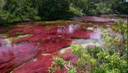 """رودخانه ای با آب هفت رنگ به نام """"رنگین کمان مایع"""" + تصاویر"""