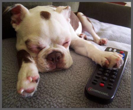 عکس توله سگ های بامزه در خواب ناز