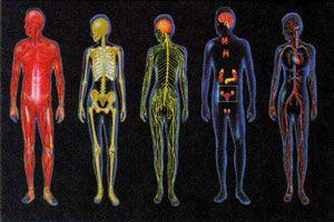 دانستنی های جالب درباره پیچیدگی بدن انسان