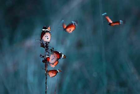پروانه های زیبا و قشنگ جهان