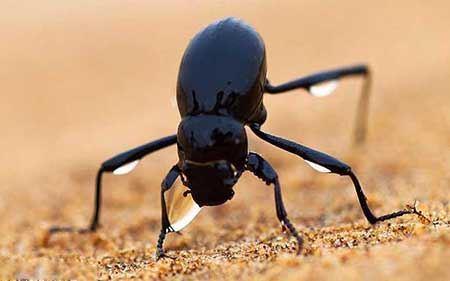 دانستنی های علمی درباره حیوانات عجیب و غریب جهان