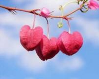 ضرب المثل عشق و عاشقی به زبان کشورهای مختلف