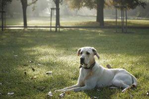 چرا سگ ها قبل از نشستن دور خود میچرخند؟