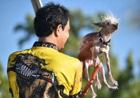 زشت ترین سگ های جهان با نژادهای گوناگون (عکس)
