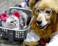 نمایشگاه بهترین سگ های دنیا در تایلند (عکس)