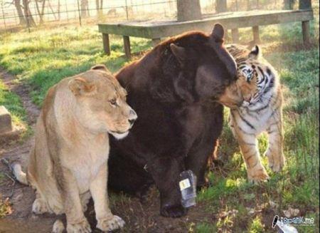 عکس های جفت گیری حیوانات وحشی