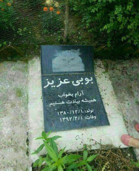عکس قبرستان حیوانات خانگی در تهران