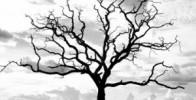 دعای پیامبر (ص) برای درخت خشکیده