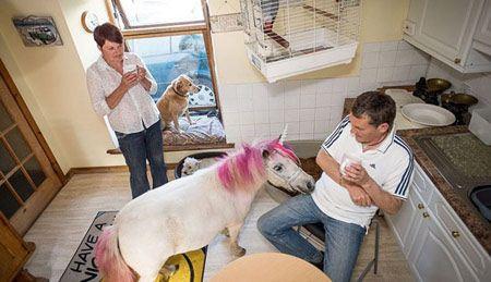 بامزه ترین اسب خانگی + تصاویر