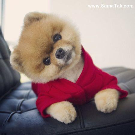 عکس های زیباترین سگ جهان