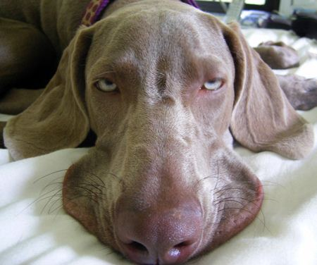 عکس های جالب حیوانات خسته و خواب آلو