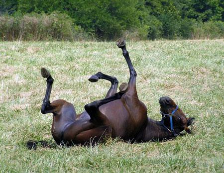 سوء استفاده جنسی زنان سوئیس از اسب های نر
