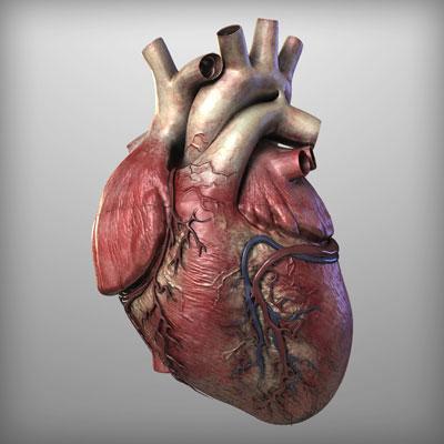 مطلب هایی بسیار مهم در مورد قلب
