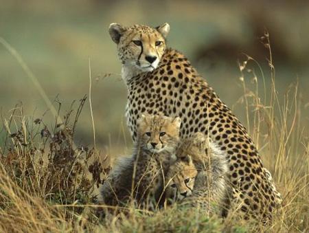 پر سرعت ترین جانوران و سریعترین حیوانات جهان + تصاویر