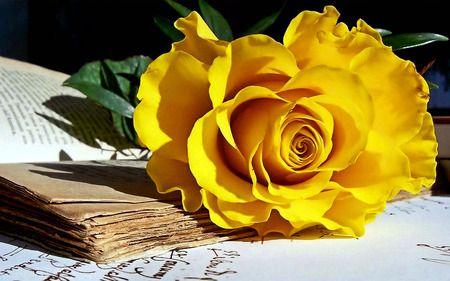 عکس زیباترین بوته های گل سرخ طبیعی در طبیعت