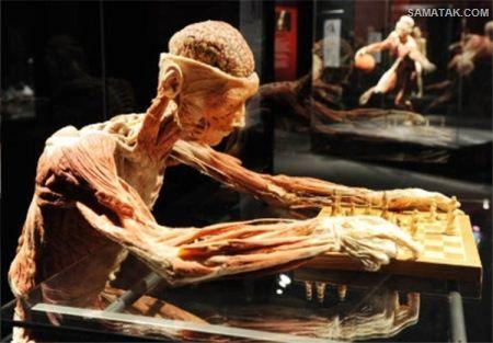 اجساد تاکسیدرمی شده انسان ها در موزه مرگ + تصاویر
