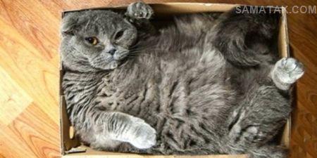 عکس های بامزه گربه های چاق تپل