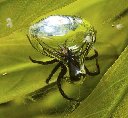 عنکبوت های کره زمین را بیشتر بشناسید