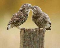 بوسیدن باعث روابط بهتر زوجین می شود