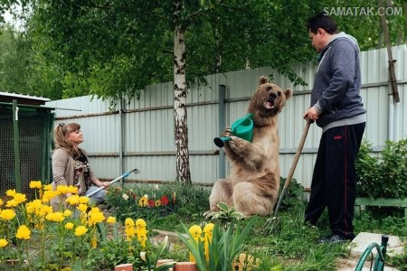 ماجرای زندگی زن و شوهر روسی با خرس غول پیکر + تصاویر